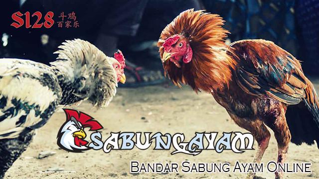 Bandar Sabung Ayam Online